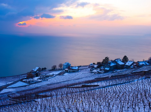 vineyard and lake in winter